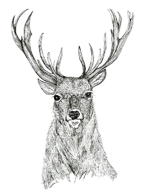 Stags Head - Canvas print