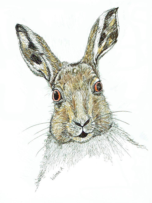 Hello Hare - Canvas print