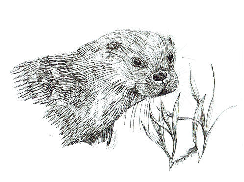 Otter - Canvas print