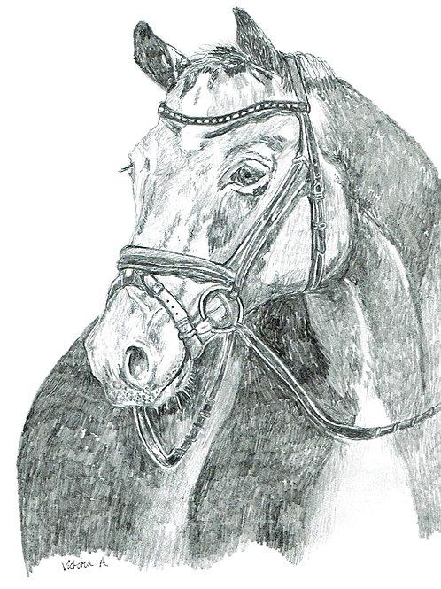 Pencil Horse - Canvas print