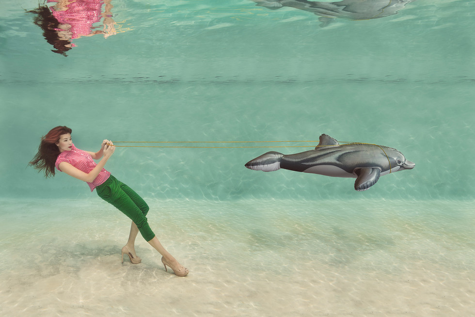 Dolphin are not pets!