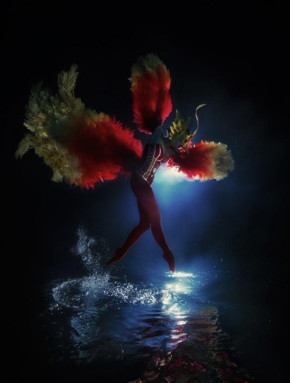 Phoenix Rebird