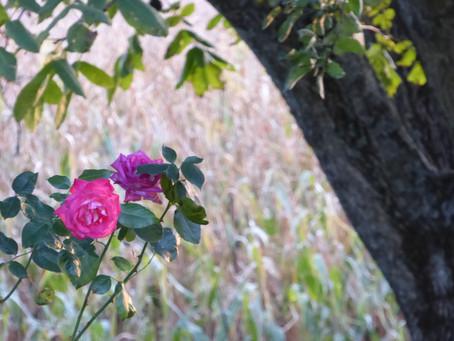 Zeit des Ausgleichs, der Ernte und des Dankes