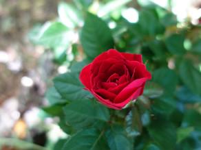 Frauen KRAFT Kreis 24.07.2021 - im Namen der Rose