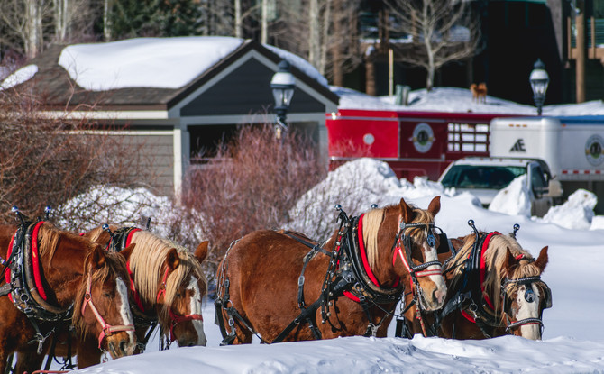 Why You Should Visit Steamboat Springs: Winter Wonderland