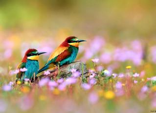 L'oiseau rare
