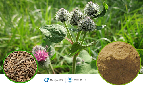Burdock Pure Extract - Niu Bang Zi  1 kg / 2.2 lbs