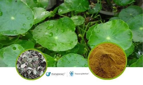 Lysimachia Pure Extract -  Jin Qian Cao - 1 kg / 2.2 lbs