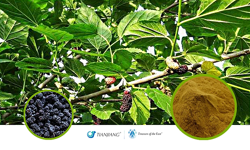Mulberry Pure Extract - Sang Shen Zi