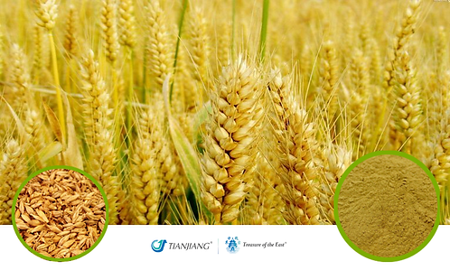 Germinated Barley Pure Extract - Mai Ya - 1 kg / 2.2 lbs