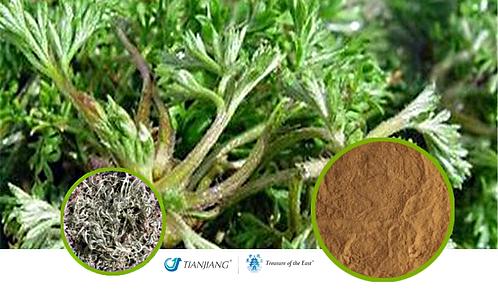 Capillaris Pure Extract - Yin Chen - 1 kg / 2.2 lbs