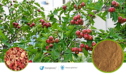 Hawthorn Pure Extract - Shan Zha / 1 kg ( 2.2 lbs)