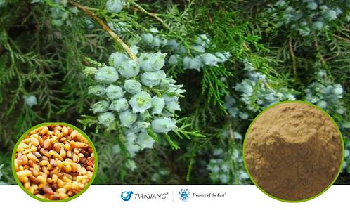 Biota Seed Pure Extract - Bai Zi Ren - 1 kg / 2.2 lbs