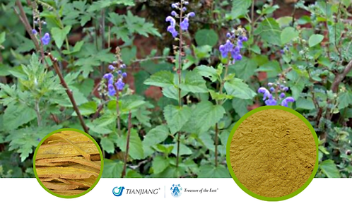 Scutellaria Pure Extract - Huang Qin - 1 kg / 2.2 lbs