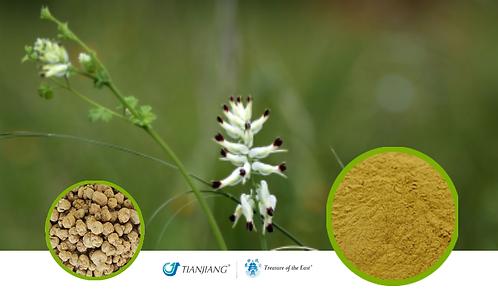 Corydalis Pure Extract - Yan Hu Suo - 1 kg / 2.2 lbs