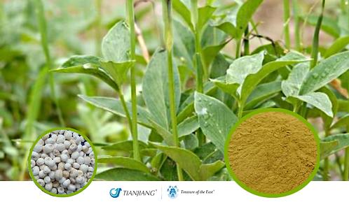 Pinellia - Ban Xia - 1 kg / 2.2 lbs