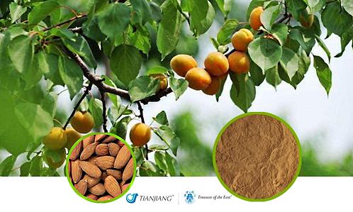 Apricot Kernel - Xing Ren - 1 kg / 2.2 lbs