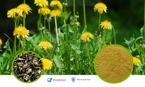 Dandelion Pure Extract - Pu Gong Ying - 1 kg / 2.2 lbs