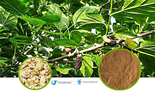 Mulberry Twig Pure Extract - Sang Zhi - 1 kg / 2.2 lbs