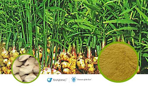 Dried Ginger - Gan Jiang  - 1 kg / 2.2 lbs