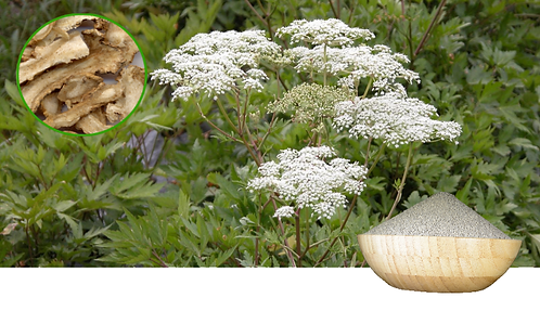 Angelica root-tail