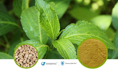 Isatis Root Pure Extract - Ban Lan Gen - 1 kg / 2.2 lbs