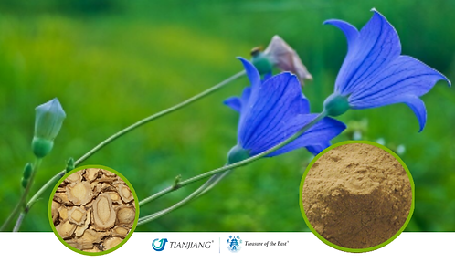 Platycodon Root Pure Extract - Jie Geng - 1 kg / 2.2 lbs