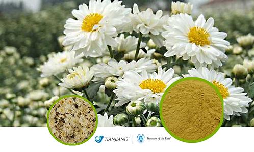 Chrysanthemum Pure Extract - Ju Hua - 1 kg / 2.2 lbs