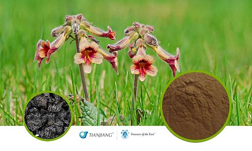 Rehmannia Pure Extract - Shu Di Huang - 1 kg / 2.2 lbs