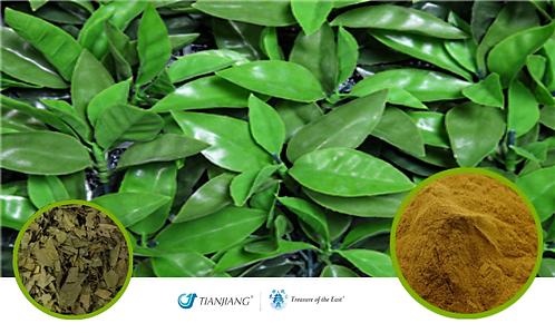 Tangerine Leaf  Pure Extract - Ju Ye - 1 kg / 2.2 lbs