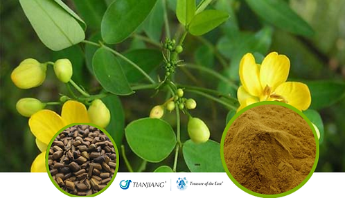 Cassia Seed Pure Extract - Cao Jue Ming - 1 kg / 2.2 lbs