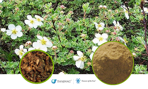 Notopterygium Pure Extract - Qiang Huo - 1 kg / 2.2 lbs