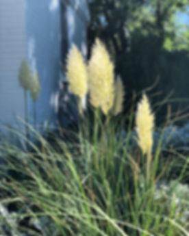 grass image.jpg