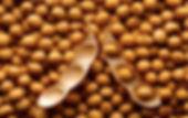 Soya beans.jpg