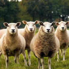 Leaving the Herd