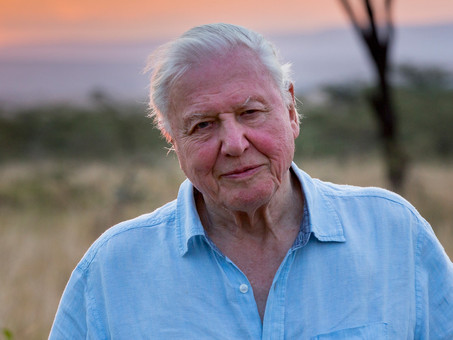 Sir David Attenborough: Lessons from Our Storytelling and Environmental Hero