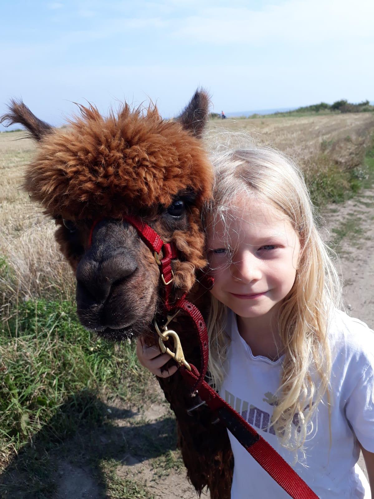 Alpakaführerschein für Kinder