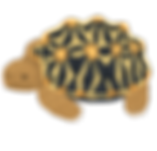 turtle_indohoshigame.png
