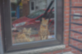 TWO CATS WINDOW