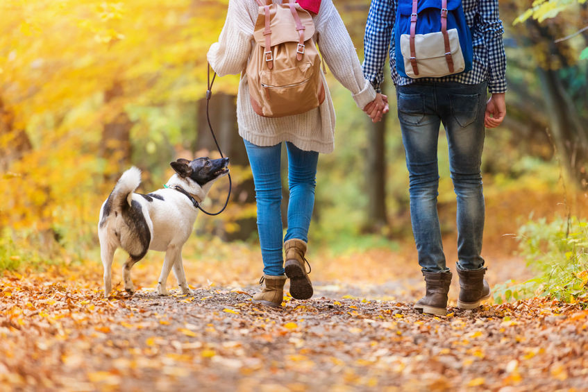 walking, wellness