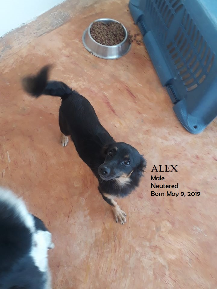 Alex male neutered born May 9 2019 info.
