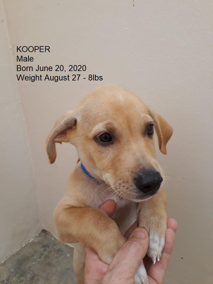 kooper aug 27 information