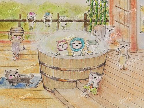 Cat Onsen