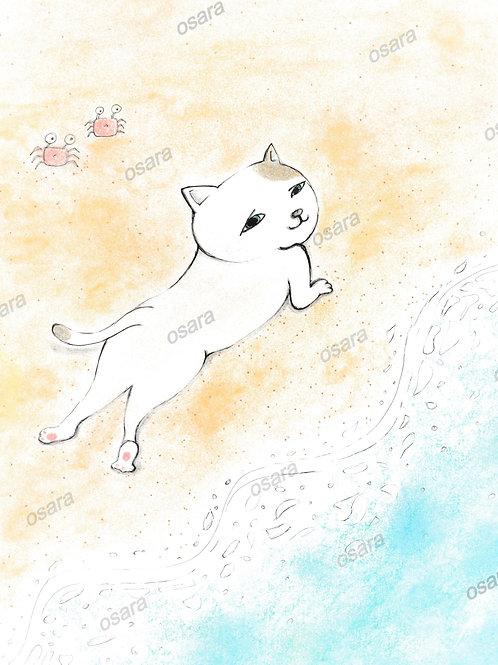 Sexy Cat on the Beach