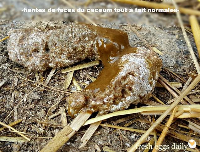 7 Tout Sur Les Cacas De Poules Verts Bruns Noirs Et