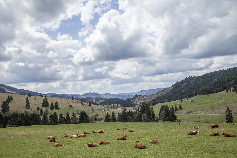 Slovakia / Travel Photography