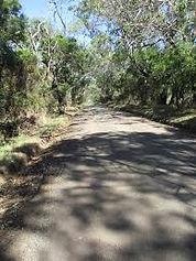 Bike Path canopy.jfif