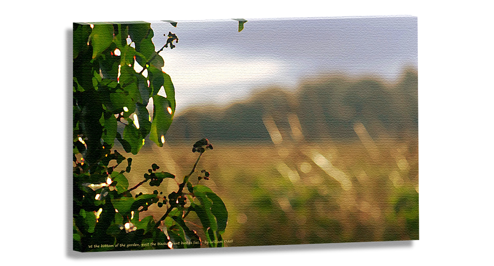 At the bottom of the garden, past the blackberries