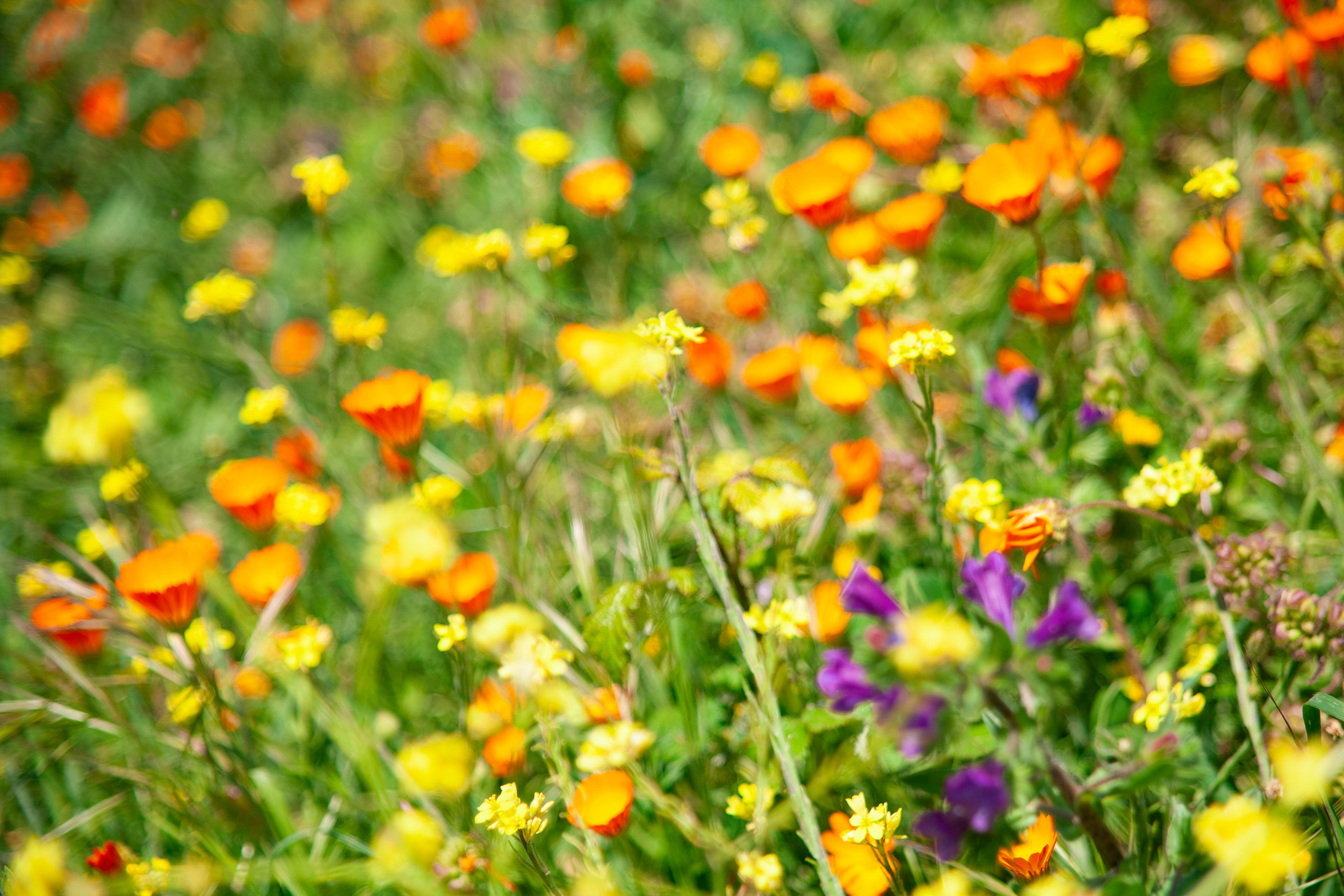 Primavera Bang Bang