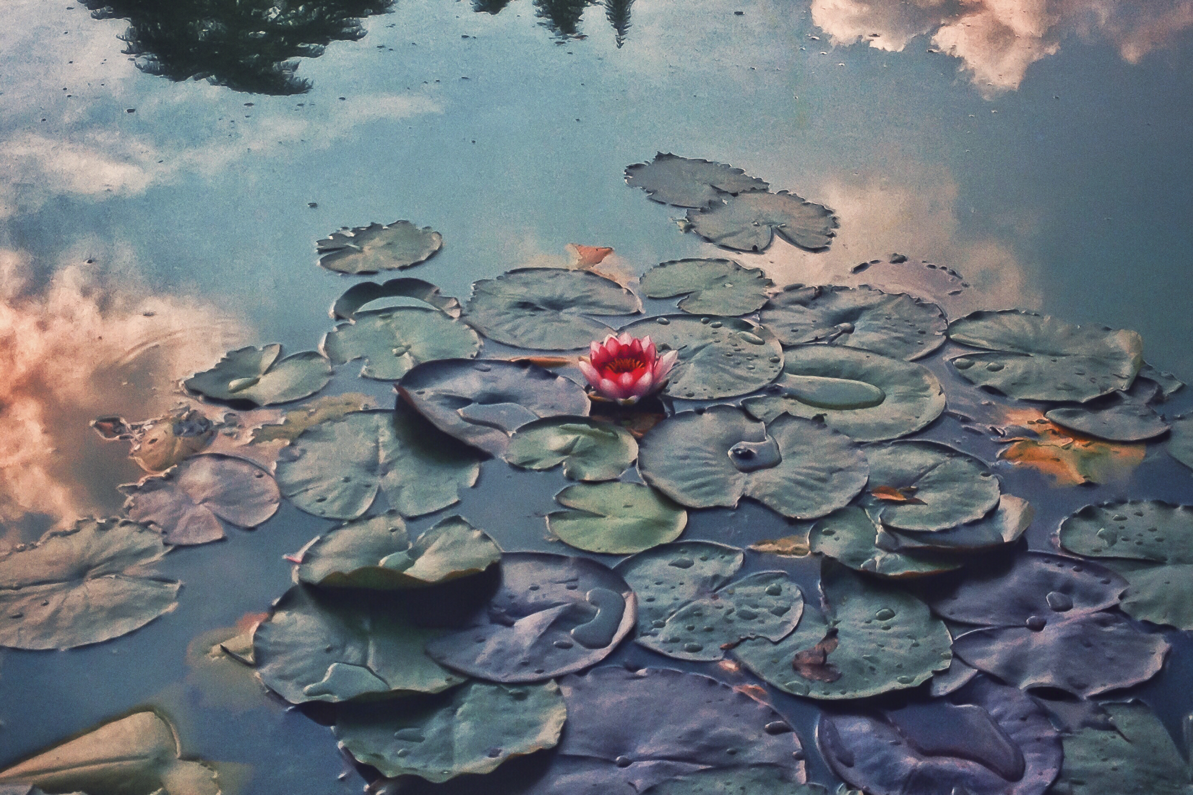 Water lilies in the clouds